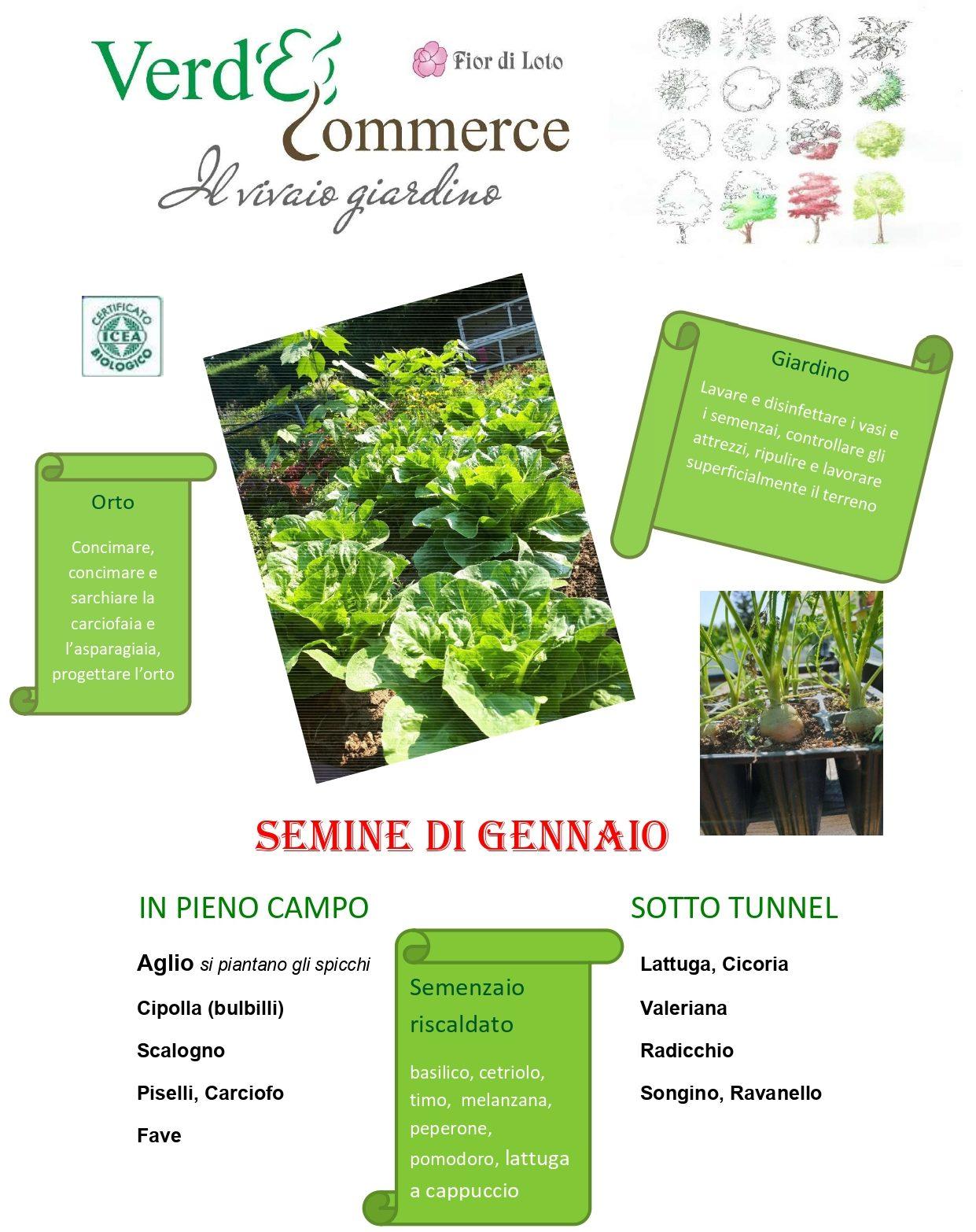 Cosa Seminare A Gennaio cosa seminare a gennaio - verde commerce